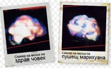 снимка, Марихуана-развенчаният мит за безвредна дрога