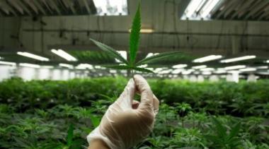 снимка, Лъжи в рекламите за медицинската марихуана. Канада ги забрани!