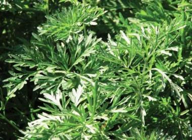 снимка, Откриха растение, което стопява раковите клетки за отрицателно време
