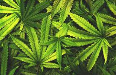 снимка, Намериха над 40 кг марихуана в къща на 72-годишна софиянка