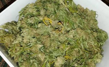 снимка, Спецакция в монтанско, намериха 10 кг канабис