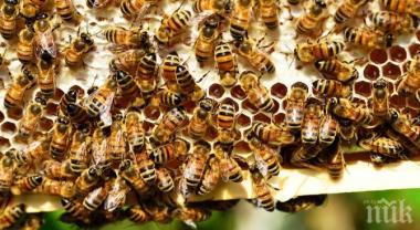 снимка, Върховната административна прокуратура се заема с опазването на пчелите
