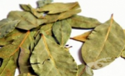 снимка, Пречистете ставите си с отвара от дафинов лист