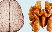 снимка, Уникално: Растенията лекуват човешките органи, на които приличат