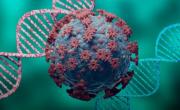 снимка, Наши учени правят лекарство срещу коронавирус с коластра