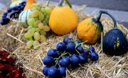 снимка, Как да разпознаем плодовете и зеленчуците с нитрати