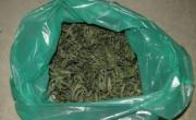 снимка, Габрово: Над 1 кг марихуана е иззета от дома на 63-годишен мъж