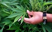 снимка, Земеделски производител спипан с 300 грама марихуана в мол