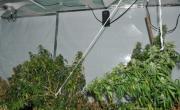снимка, 81% от българите против легализирането на марихуаната