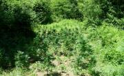 снимка, Трима от Беласица на съд за отглеждане и разпространение на марихуана