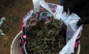 снимка, Откриха 29,850 кг канабис и марихуана в Илинденци