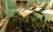 """снимка, Полицаи откриха триетажна оранжерия с марихуана в """"Бояна"""""""