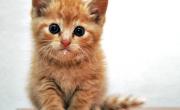 снимка, Какво означава, когато котката ви се свие на кълбо на дивана с вас