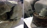 снимка, Исмет видя странен камък в планината до България! Обърна го и шок! На учените им спря токът! Хит снимки, на 20 000 години е, но това е