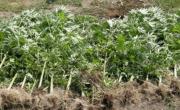 снимка, Откриха канабис във монтанска ферма, но в Шуменско хванаха 80 кила в дом на служител от БАБХ