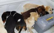 снимка, ХЕРОИН - Кучета за трафик на наркотици използвал ветеринар