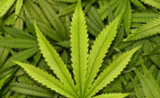 снимка, Задържаха 36-годишен мъж за притежание на наркотици