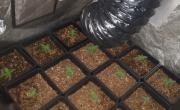 снимка, Задържаха варненец за отглеждане и разпространение на марихуана