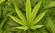снимка, Задържаха мъж с над 350 грама марихуана