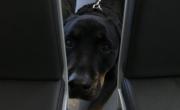 снимка, Домашно куче уби бебе в предградие на Атина