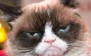 снимка, Факти за котките - 15 неща, които може би не знаете