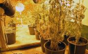 снимка, Разбиха домашна наркооранжерия в Кърджалийско